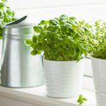 indoor garden, winter, garden, indoors, winter garden, green thumb, garden space