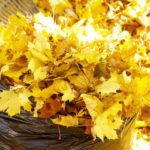 leaves, leaf, fall, autumn, divito dream makers, denver dream making, making dreams come true, dispose, proper, good neighbor, rake, raking, denver, colorado, arvada, real estate, real estate team, realtor, house, home, homeowner